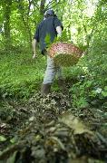 Raccolta funghi, norme in vigore dal 1° gennaio 2011
