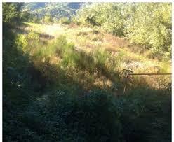Commissario prefettizio del Comune di Pescia ''I rifiuti del campo sportivo di Sorana non sono tossici''