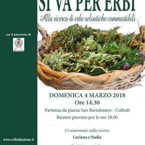 Domenica 4 marzo ''Si va per erbi''