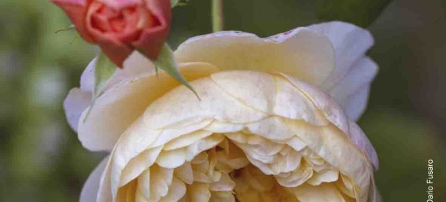 Da Pescia il vivaio Checchi Roi a Verdealmare - Sestri Levante 26 e 27 maggio