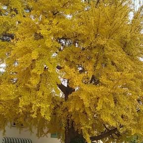 MALTEMPO E CAMBIAMENTO DEL CLIMA  Senza manutenzione gli alberi fanno danni,  servono nuove piante che riducono l'inquinamento