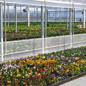 Quattro aziende di Cia Toscana Centro espongono a Myplant & Garden dal 20 al 22 febbraio