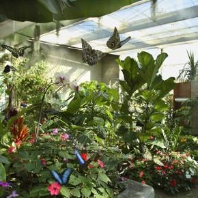 Collodi. Giochi, laboratori, tornei, spettacoli e giornate a tema Eventi diffusi tra Parco di Pinocchio e Storico Giardino Garzoni - Casa delle Farfalle