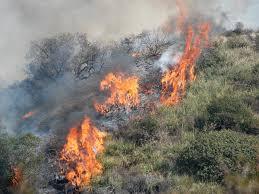 """Giurlani chiede alla Prefettura un incontro dopo gli incendi di Stiappa e Pontito """"Preoccupati e indignati dalla loro probabile origine dolosa """""""