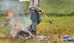 """Da lunedi anche a Pescia il divieto di bruciare residui vegetali   Giurlani """"Il pericolo è reale, faremo controlli"""""""