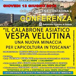 """Giovedì 13 Giugno 2019 alle ore 20.00 cena contadina e conferenza: """"Calabrone Asiatico - Vespa Velutina -. Una nuova minaccia per l'apicoltura in Toscana"""". Presso il circolo A.R.C.I. di Vellano."""