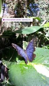 Eventi in programma al Parco di Pinocchio e allo Storico Giardino Garzoni – Casa delle Farfalle nel mese di SETTEMBRE 2019