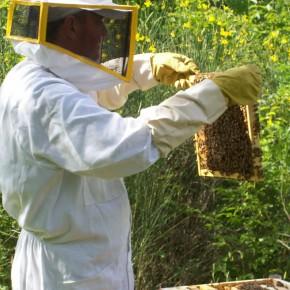 Gli uffici di Cia Toscana Centro a disposizione delle imprese del settore apistico  Cia: il 2019 catastrofico per il miele, in arrivo finanziamenti a tasso 0 per gli apicoltori