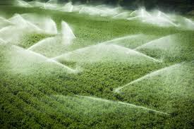 GESTIONE DELLE ACQUE. A Pistoia corso gratuito per le aziende agricole     Coldiretti. Un ulteriore tassello per l'ecosostenibilità nelle aziende agricole