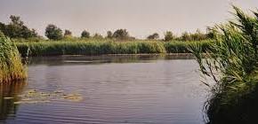 Padule di Fucecchio e Lago di Sibolla, mozione Marchetti (FI) «Coinvolgere nella gestione organizzazioni ambientaliste e valorizzare esperienza del Centro di Ricerca»