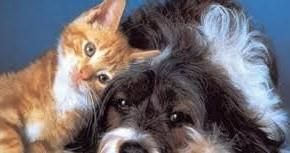 PESCIA AMA GLI ANIMALI, PROGETTO COMUNALE           Arriva la Consulta per gli affari animali, seguiranno tante iniziative