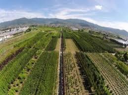 Variante al Regolamento Urbanistico di Pistoia: le associazioni agricole, unite, chiedono alcune modifiche
