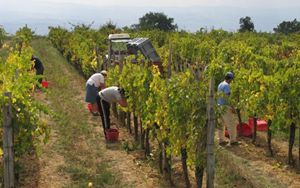 CURA ITALIA: COLDIRETTI, ANCHE I PARENTI NEI CAMPI CONTRO LA FAME
