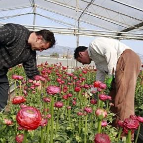 CORONAVIRUS, CONFAGRICOLTURA: RIPRISTINARE LE ATTIVITA' DI MANUTENZIONE DEL VERDE  L'Organizzazione degli imprenditori agricoli chiede interventi comunitari e nazionali per il florovivaismo