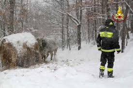 EMERGENZA NEVE. Bovini e pecore a rischio  Strade bloccate e tetti di stalle appesantiti dalla troppa neve  Coldiretti: mettere immediatamente in campo tutte le risorse disponibili
