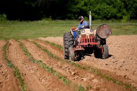 Agevolazioni fiscali, filiere e giovani: nella legge di Bilancio 2021 un miliardo per l'agricoltura L'informazione ai soci grazie a 'Coldiretti Pistoia INFORMA' e 'Il PUNTO Coldiretti'