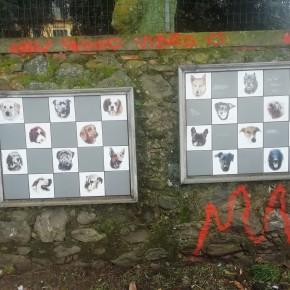 """Spray vandalico al muro degli animali a Pescia     Guidi """"Gesto deprecabile, il comune provvederà a ripulirlo"""""""