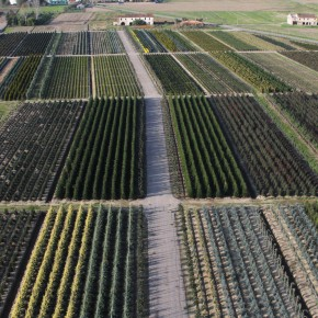 VIVAISMO. Il ruolo del Giardino d'Italia per attenuare gli effetti del riscaldamento globale     COLDIRETTI PISTOIA. Consumo del suolo, poco verde urbano, inquinamento, eventi meteorologici estremi sono effetti e cause del cambiamento climatico     In Italia: cementificazione avanza ad un ritmo di 2 metri quadrati al secondo