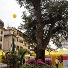 Al via G20: in piazza l'agricoltura che verrà  Studenti di Casalguidi visitano Piazza Santa Croce trasformata in una maxi fattoria del futuro  E all'ingresso una quercia ultrasecolare 'Made in Pistoia'
