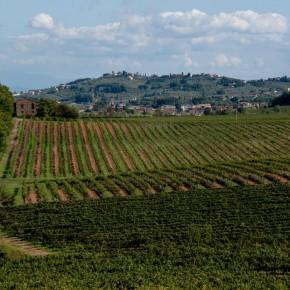 """Confagricoltura PT: """"Bonacchi: nel pistoiese calo della produzione di vino del 15/20%"""""""